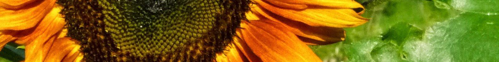 Příběh Kláry – regresní terapie