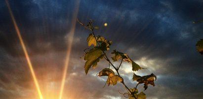 Blog na pokračování – Díl 4. – Zbloudilé duše